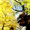 Photos: 成田山・新勝寺
