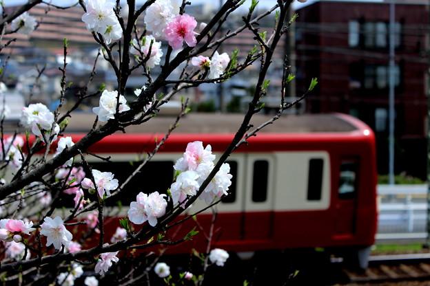 Photos: 京急・金沢文庫~能見台