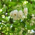 小さな春のベル
