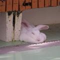 Photos: とろけそうな寝心地