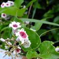 Photos: 花の命は短いかな―?