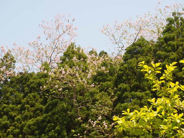 写真: 狗山 キリ
