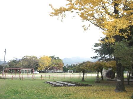 土々呂小 いちょう (2)