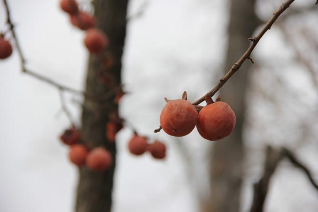 干し柿(天然もの)