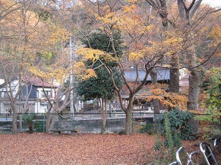 高尾山口の紅葉