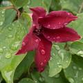 Photos: 庭の花 3