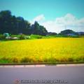 Photos: 田園