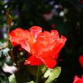 Photos: IMG_4244