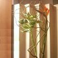 Photos: 好きな花材、苦手な花材