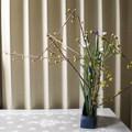 Photos: 黄色い花は早春の色