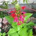 Photos: 赤い花