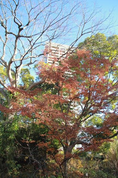 宝塚ガーデンフィールズ13122408