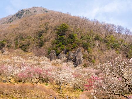 2013/3/10 湯河原梅林 その7