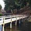 写真: 公園の橋