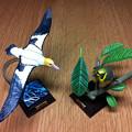 写真: アホウドリとメグロ
