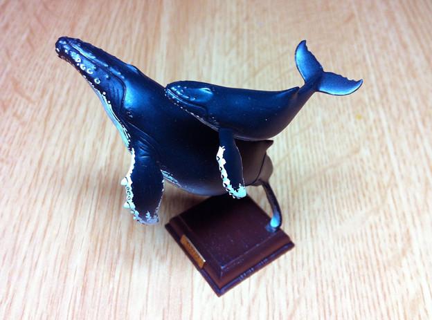 写真: ザトウクジラ