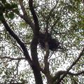 写真: 鳥の巣
