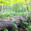 写真: 倒木