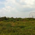 写真: 葛西臨海公園