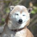 Photos: ウトウト犬