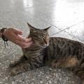 Photos: 駅内にて第一村猫