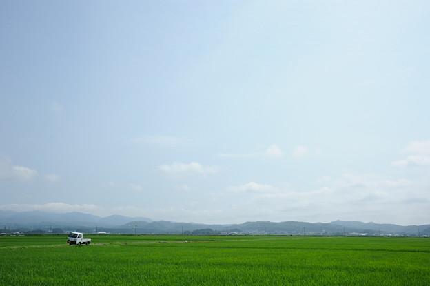 初夏の津軽平野