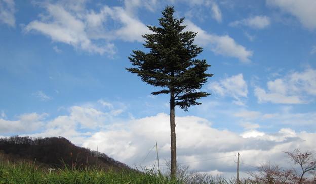 一本の樹、冬の始まり
