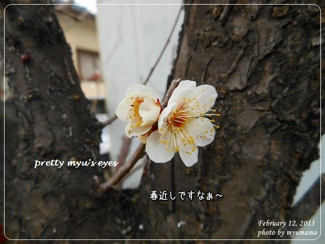 写真: s-028