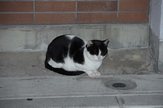 迷子の猫(別府市鶴見原)の飼い主探し1