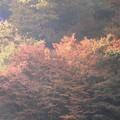 Photos: 11月26日「古岩屋の紅葉」