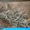 2月10日「搬入木」