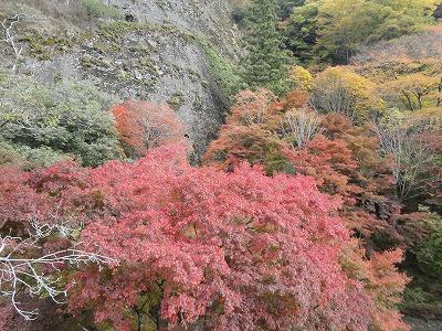 Photos: 11月6日「古岩屋の紅葉」