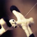Photos: stork