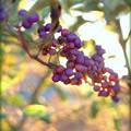 Un imporpori frutta