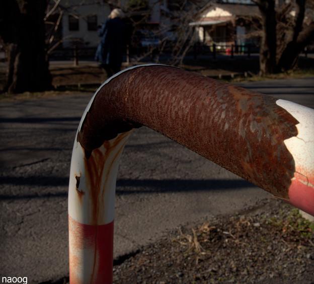木漏れ日を撮る人。
