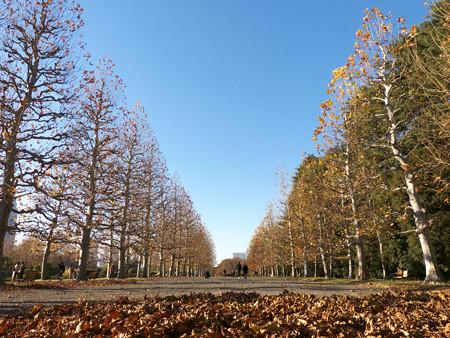 写真: blue sky