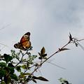 Photos: 空と蝶と