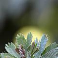 Photos: 原始植物?