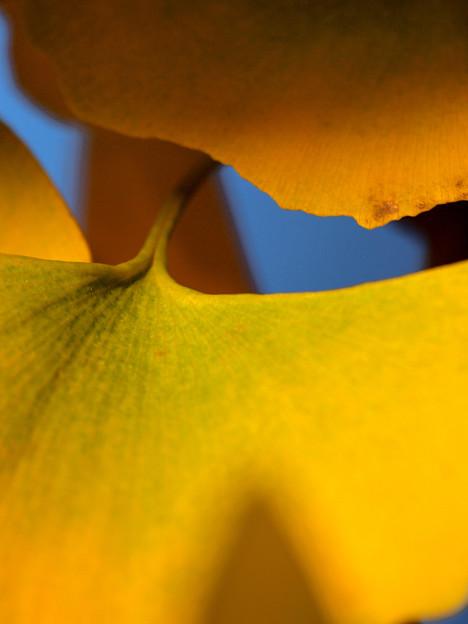 Photos: Autumnal color