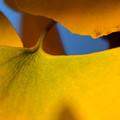 Autumnal color