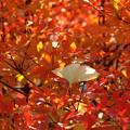 ドウダンツツジとイチョウの葉