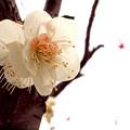 Photos: 初春のデザイン