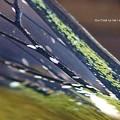 Photos: 鱗粉(粉)と言うより顆粒(米粒的)。(オオスカシバ飼育)