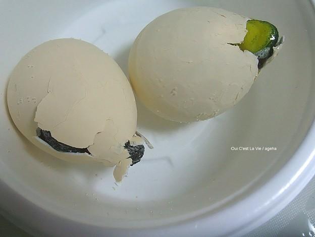 んー??(カメの卵孵化)