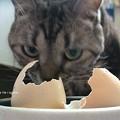 Photos: もぬけの殻…。(カメの卵孵化)