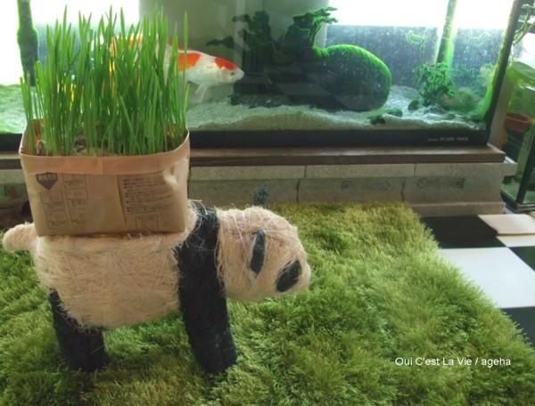猫草パンダに入らず無念。
