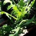 上にぐんぐん伸びるナゾの植物。