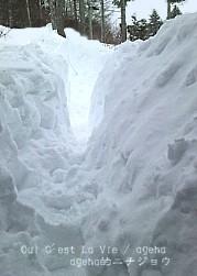 2014.2.14fri大雪信州。玄関前は獣道。