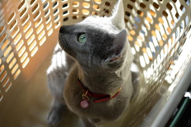 愛猫(1)