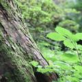 Photos: ようこそ。。森へ